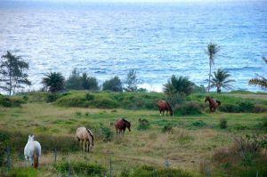 horses by ocean