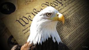 eagle-of-freedom-31539