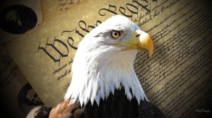 eagle-of-freedom-31539