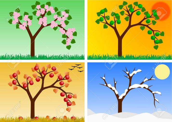 apple-tree-in-four-seasons-Stock-Photo