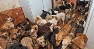 dog hoarding