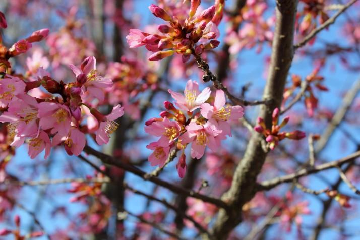 blossoms & buds